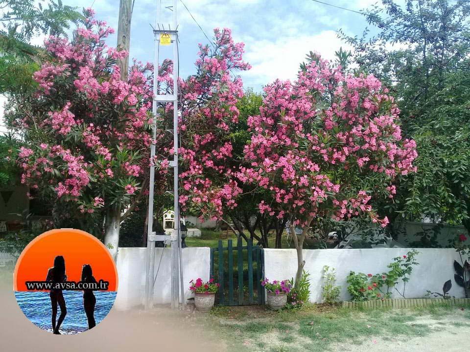 Villa Öykü Evi 3